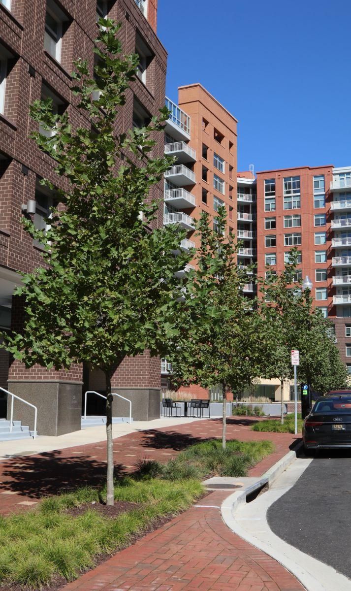 KTE On the Job:  The Clark at Potomac Yard; Part 3 of 3: PLAZA (Spr 2021)