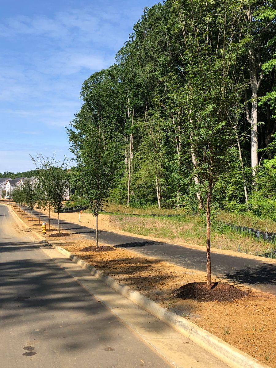 KTE On the Job:  Potomac Shores Street Trees [Jun 2021]
