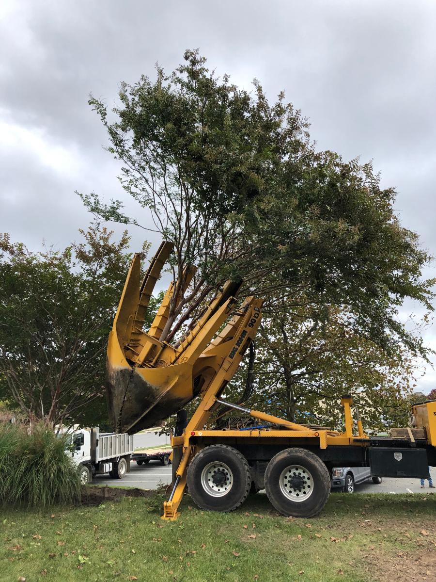 KTE On the Job:  Moving Large Trees at Brambleton (Oct 2020)