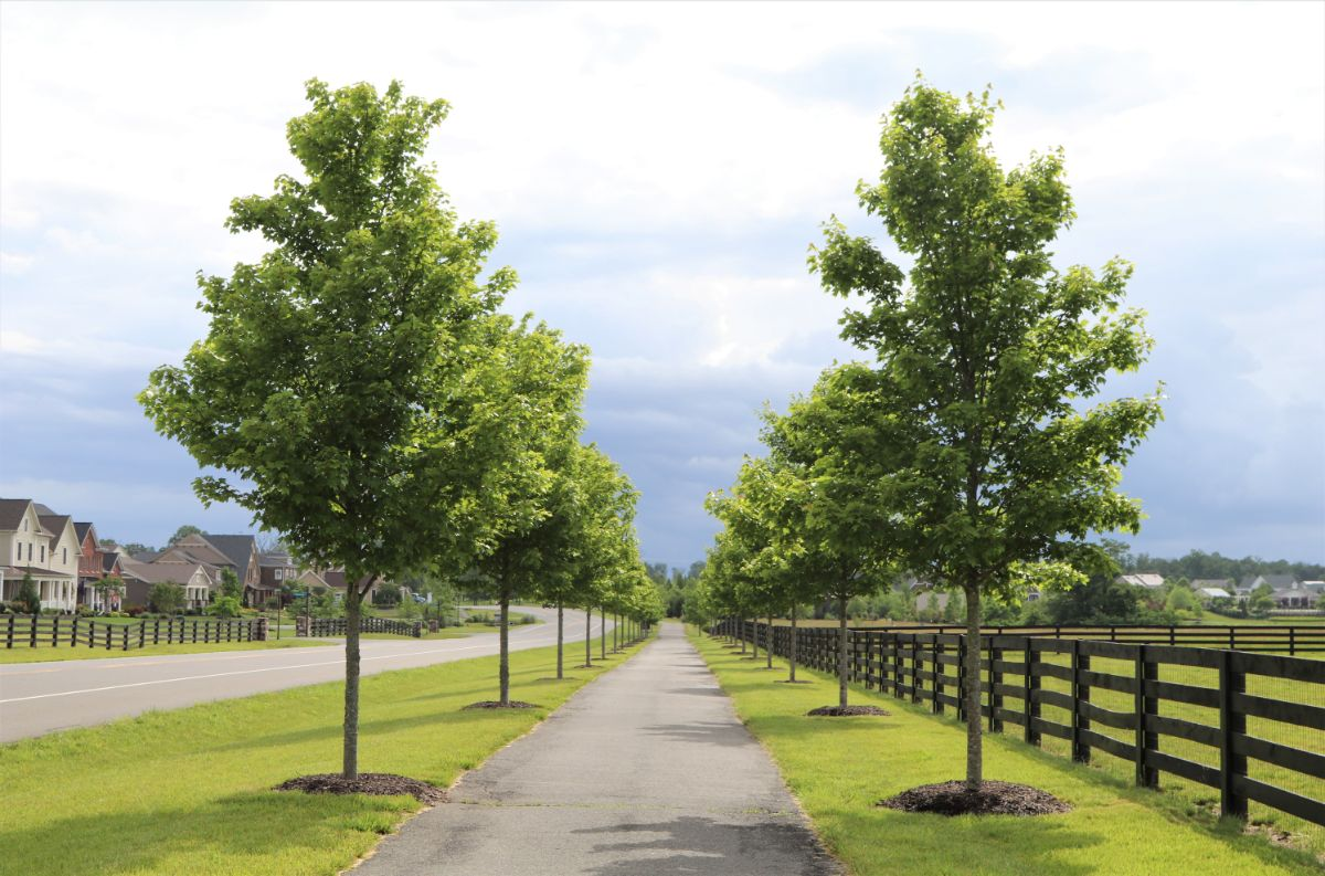 KTE On the Job:  Mature Trees (Summer 2020)